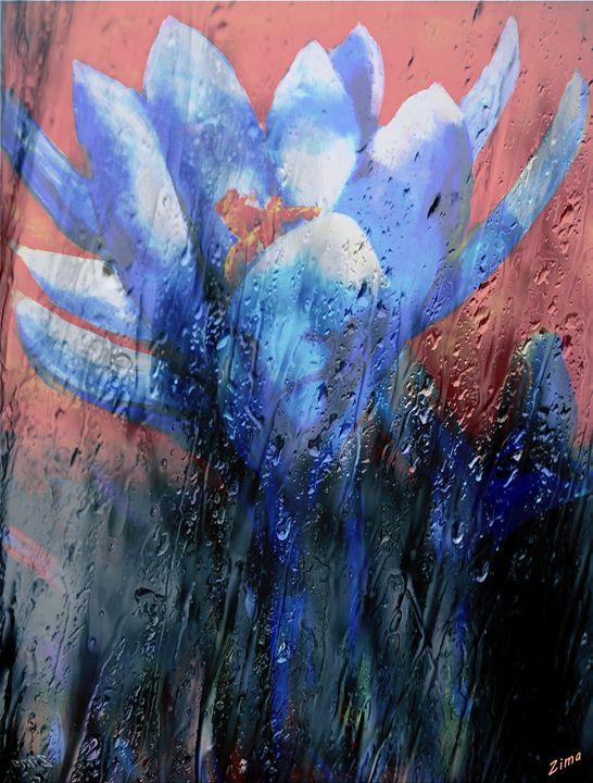Lily In The Rain - Zima