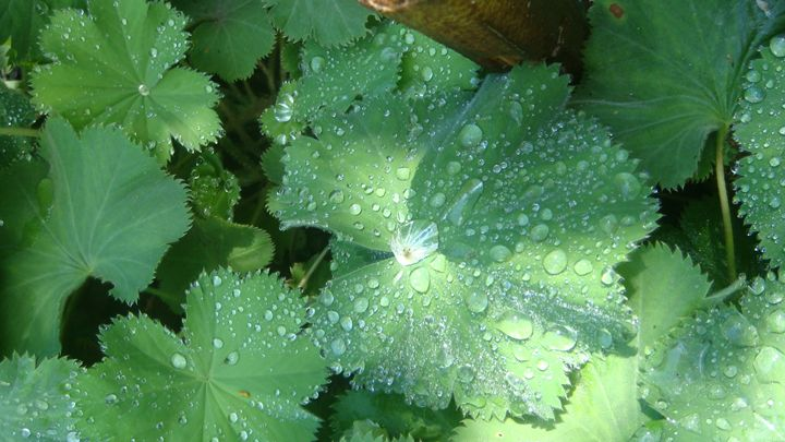 Rain on Zucchini - Earthworks Art Designs and Photography