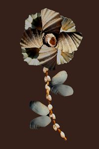 Shell Flower nº2