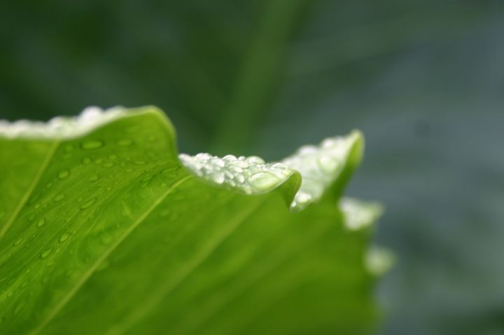 Tip of the palm leaf - Sue Rode Photography