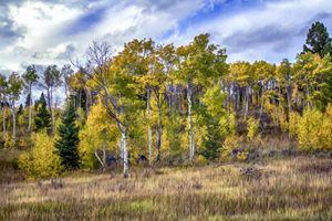 Fall NE Yellowstone (Cooke City, MT)