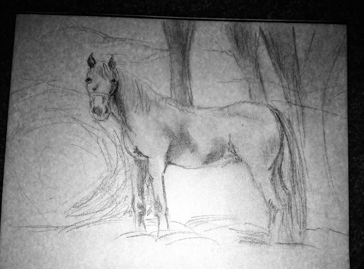 Horse - Aga