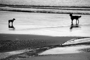 Standoff At The Beach