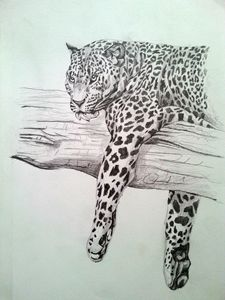 Pencil Drawing Big Cat Original