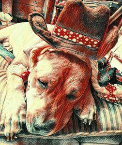 Sad Marley Cowgirl Dog