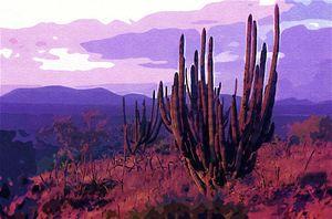 Sahuaro. Baja desert