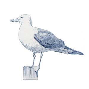 Seagull - Papo Dsign Gallery