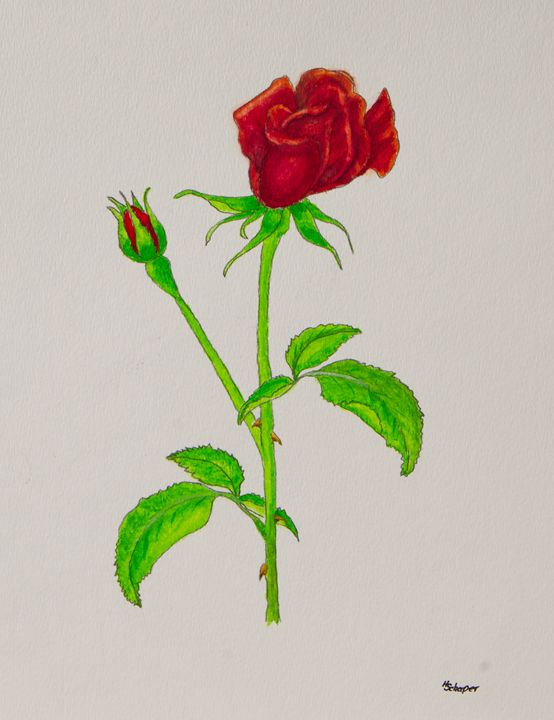 Single Rose - Schaper's Gallery