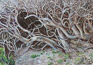 If Medusa was a tree