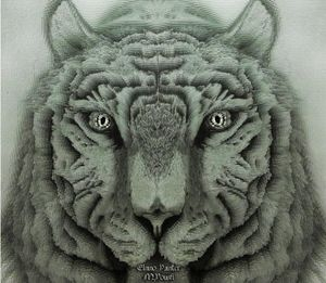 Clouthy Tigre