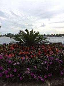 Palm tree & flowerbed