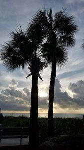 Sparkling palms
