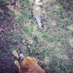 Dog and Iguana