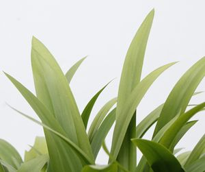 Green plants with white background