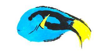 Paracanthurus hepatus (Blue Tang)