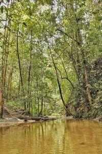 Clear stream in forest of Sebangkoi
