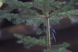 Bird in a Tree - KSB Photography