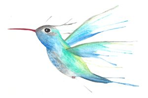 Watercolor Hummingbird