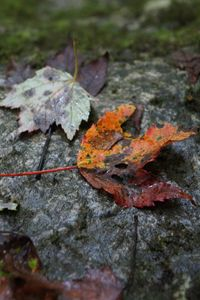 Fall Leaves By the Riven