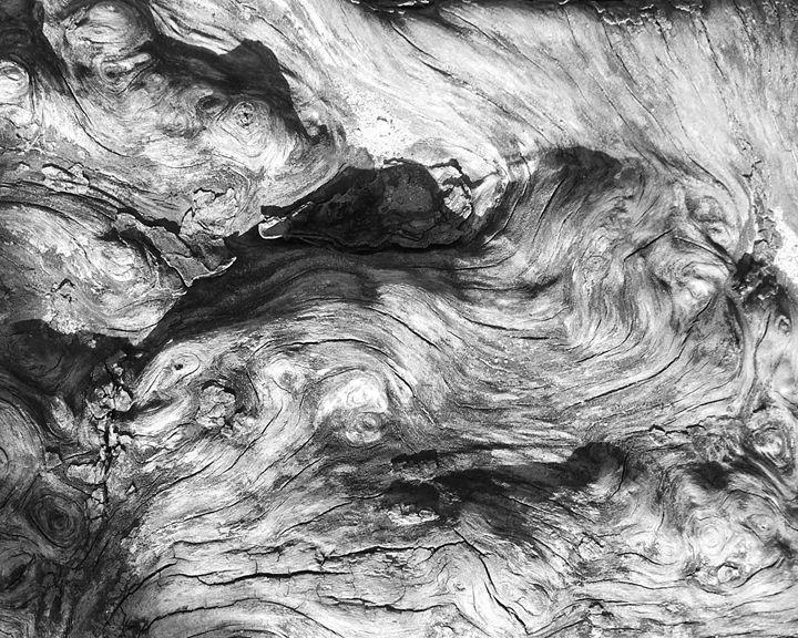 Essence of a Stump - J Meier Photo