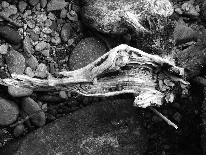 Bone Dry - J Meier Photo
