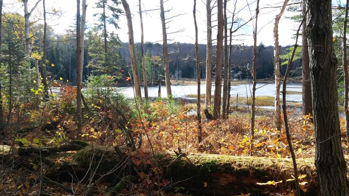 Fall in Northern Ontairo - iGallery