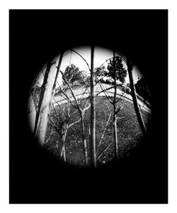 Branches - Pinhole Camera