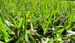 Keep Your Grass Cut