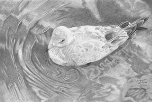 Seagull in Water - Gerbers Fine Art
