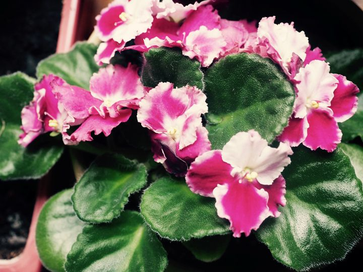 Flowers - Liana