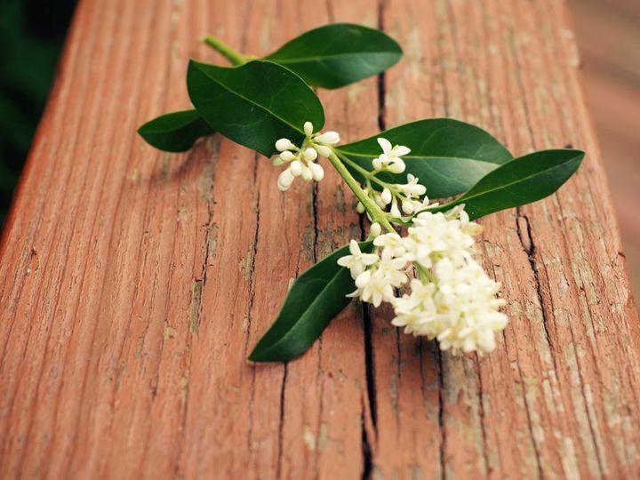 Flower Branch - Liana