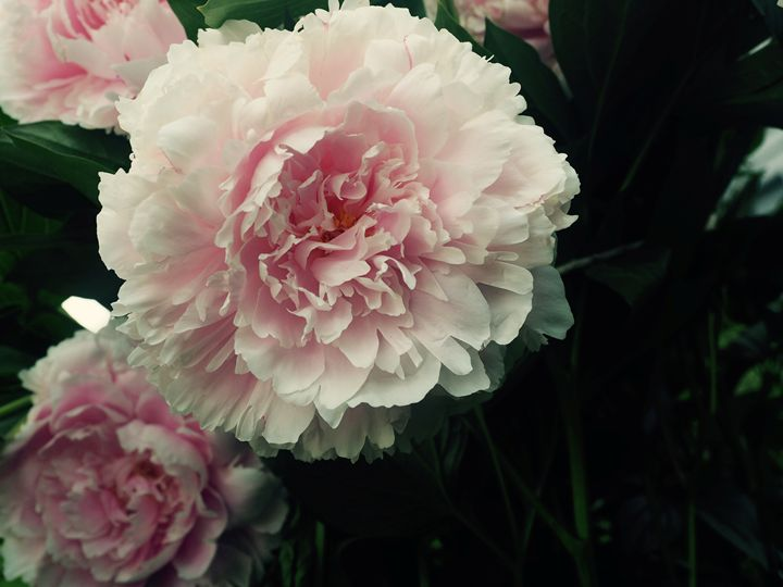 Flower Power - Liana