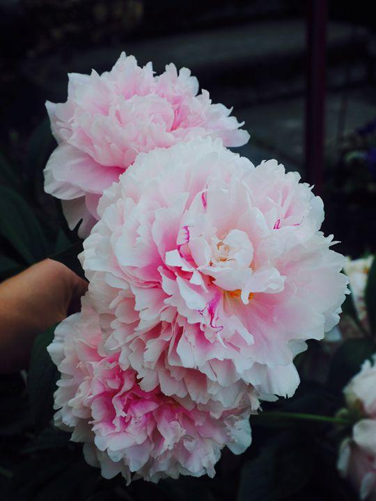 Beautiful Flowers - Liana