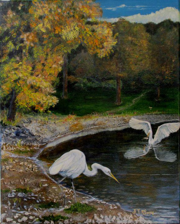 Egrets on pond - Art by JAMES B TAYLOR