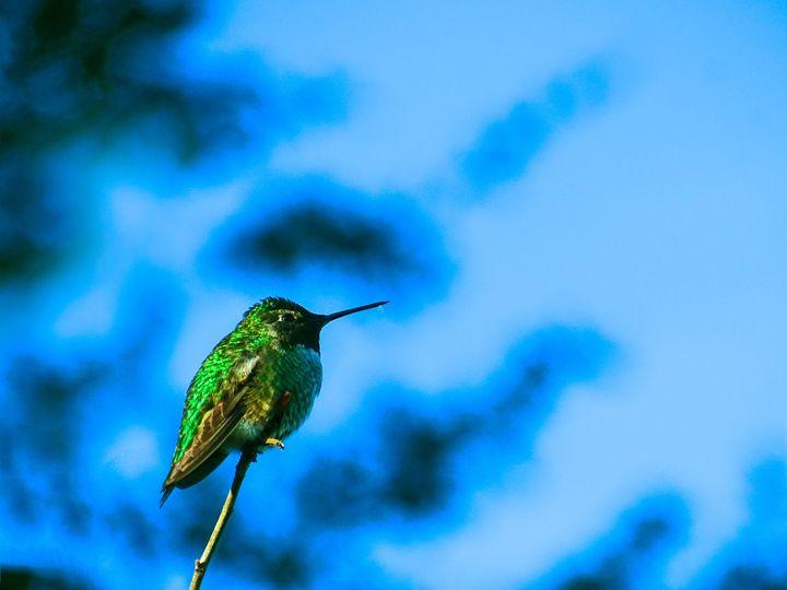 Hummingbird - FoxyStars