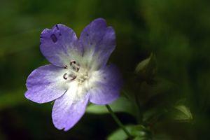 Love Purple Flower