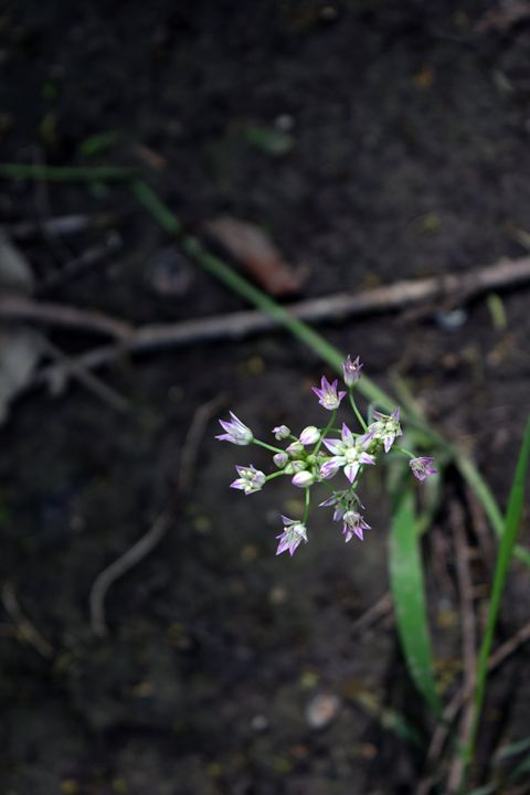 Nice Purple Flowers - Emma | June Photography