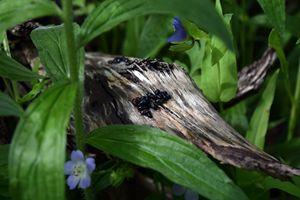 Beetle Log