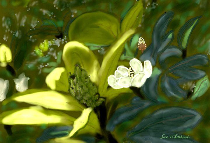 Magnificent Magnolia - Sue Whitehead Arts