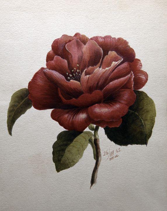 1865 Flower - Robb Rokk