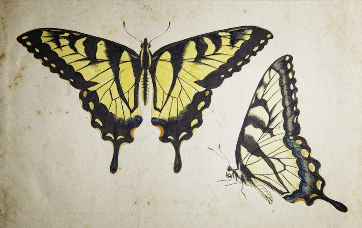 Monarch - Robb Rokk