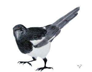 Magpie - Linda Ursin