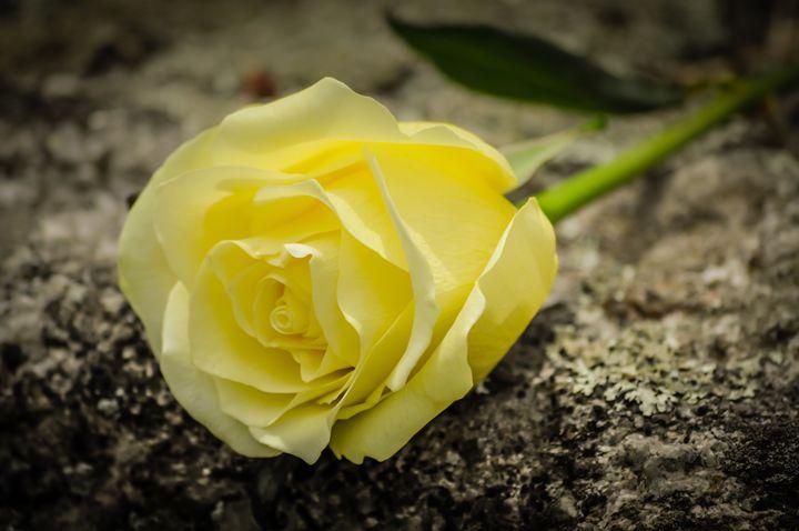 Single Yellow Rose - Jus4fundesigns