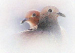 Two Doves - Mike-e-Art
