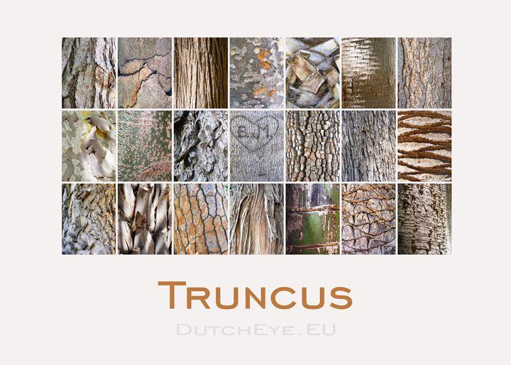 Truncus-S - DutchEye.EU