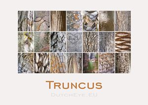 Truncus-S