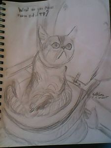 cat on toilet