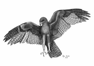 Eagle Pointillism Drawing - Mike Oliver Pointallism