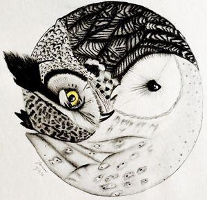 Yin-Yang Owl Drawing