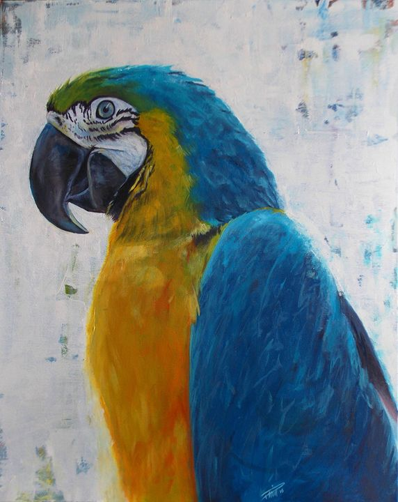 Macaw - Joanna's Colours